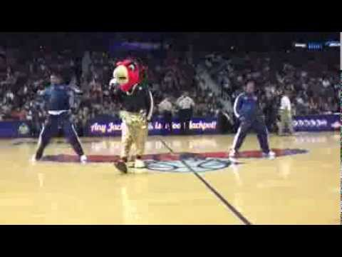 Download Harry the hawk doing hammer dance