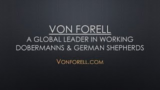 Von Forell German Shepherds On Hound Tv