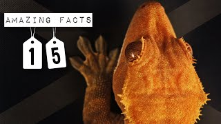 15 AMAZING FACTS ABOUT CRESTED GECKOS