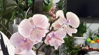 Орхидеи и все о них ОТВЕТЫ НА ВАШИ ВОПРОСЫ Многие услышат ценную информацию про уход о ОРХИДЕЯХ