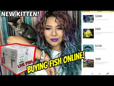 BUYING EXOTIC FISH ONLINE AND HAVING THEM SHIPPED TO YOU! HOW I DO IT (SHOP WITH ME)