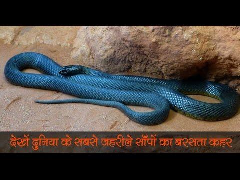 ये हैं दुनिया के 10 सबसे जहरीले सांप जिनके बारे में ... |Check Out The World's Most Poisonous Snake thumbnail