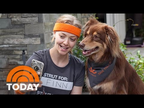 Amanda Seyfried: Adopting My Dog Finn 'Changed My Life' | TODAY