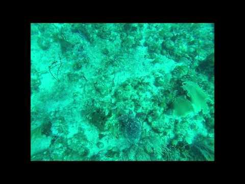 Dive Channel: St. Eustatius
