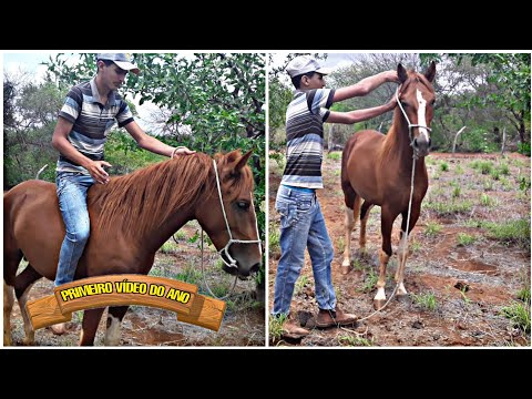 Pegando Os Cavalos (CANAL DO VAQUEIRO)