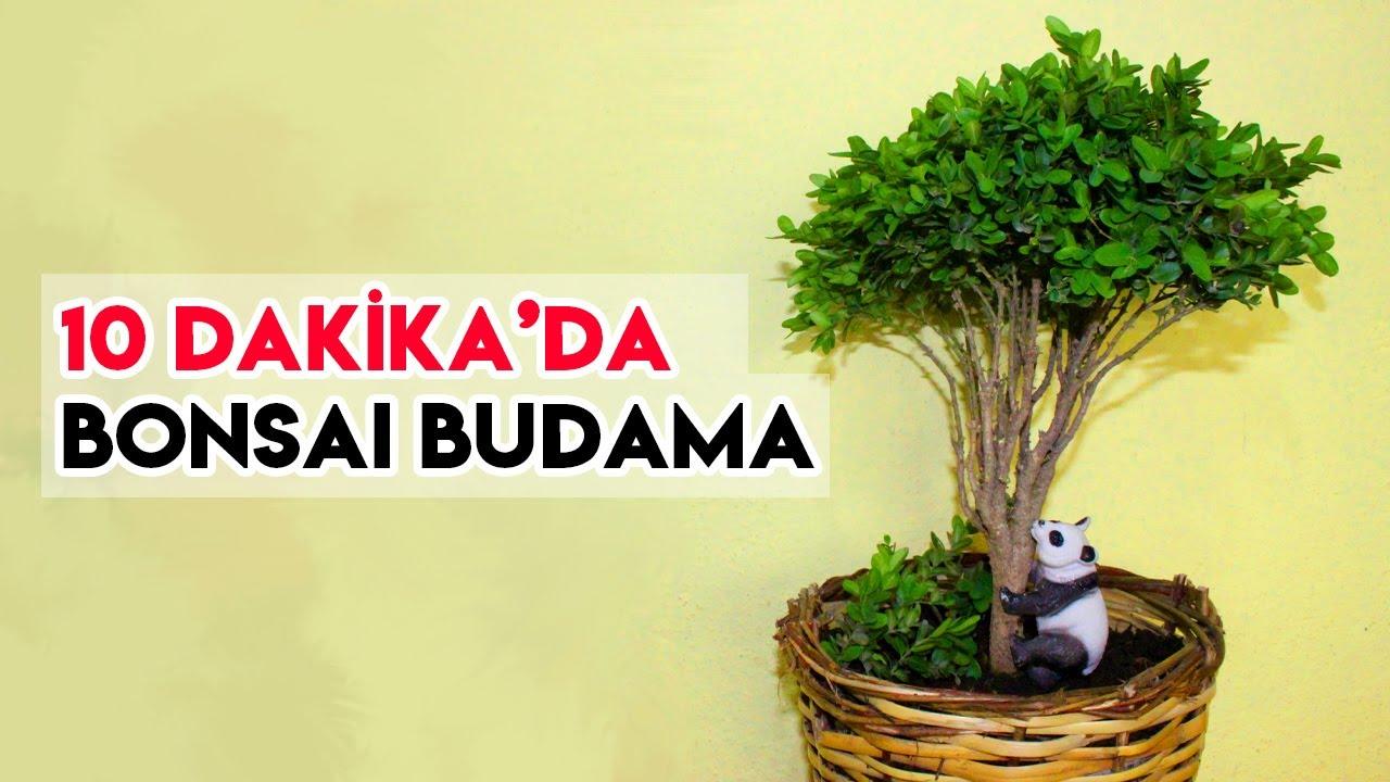 Bonsai Ağacı Nasıl Yapılır I Evde Bonsai Bitkisi Bakım, Dikim, Çoğaltma ve Üretim I Amatör - Kolay