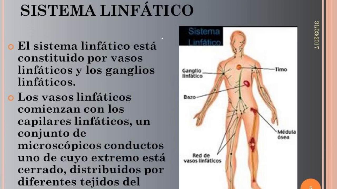 Sistema linfático - YouTube