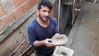 Incubadora caseira para ovos de corn snake