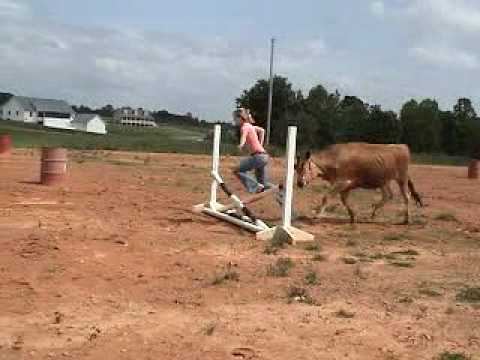 Live Cow On Roof Doovi