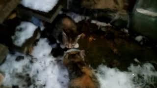 Бездомные котята, Хотьково 10.12.2018