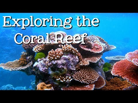 Exploring the Coral Reef: Learn about Oceans for Kids - Free