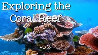 Exploring the Coral Reef: Learn about Oceans for Kids - FreeSchool(Come learn about the amazing creatures that inhabit the coral reefs and how to protect them! We'll see sharks and sea turtles, parrotfish, eels, octopus, clownfish ..., 2015-01-26T16:51:09.000Z)