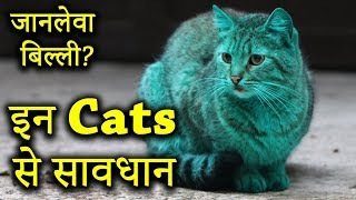 दुनिया की 10 सबसे ख़तरनाक बिल्लियाँ | Top 10 Dangerous CATS of World 🙀