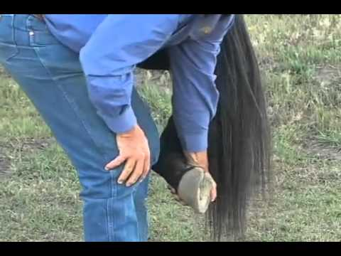 Parelli Natural Horse Training Tip  Handling your horse's feet