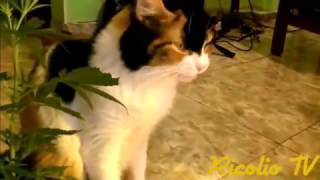 EPIC WEED FAILS COMPILATION 2016
