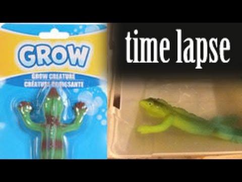 GROW! Lizard - Time Lapse