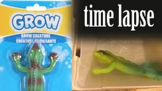 GROW! Lizard - Time Lapse