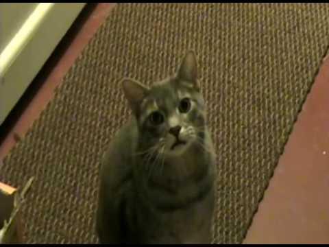 Se il vostro gatto, invece di dire Miao dicesse Hey?