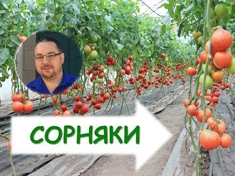 Технология выращивания огурца. Как вырастить огурцы в теплице? Как бороться с сорняками?