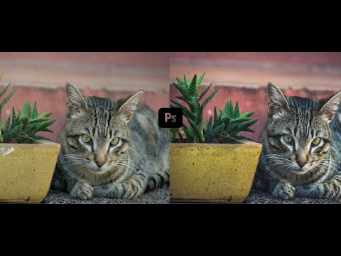Pet photography : Cat Outdoor Photo Editing