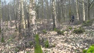 Ftw Springer Spaniel Hunting Palmarrion Buccaneer