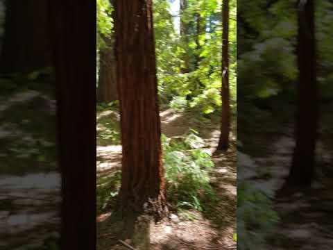 Sanborn county park Saratoga sequoia grove
