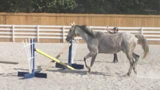 Secret: 11 yo Appendix Quarter Horse