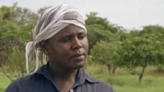 Shamba Shape Up Sn 06 - Ep 5 Cassava, Mangoes, Pest control (English)