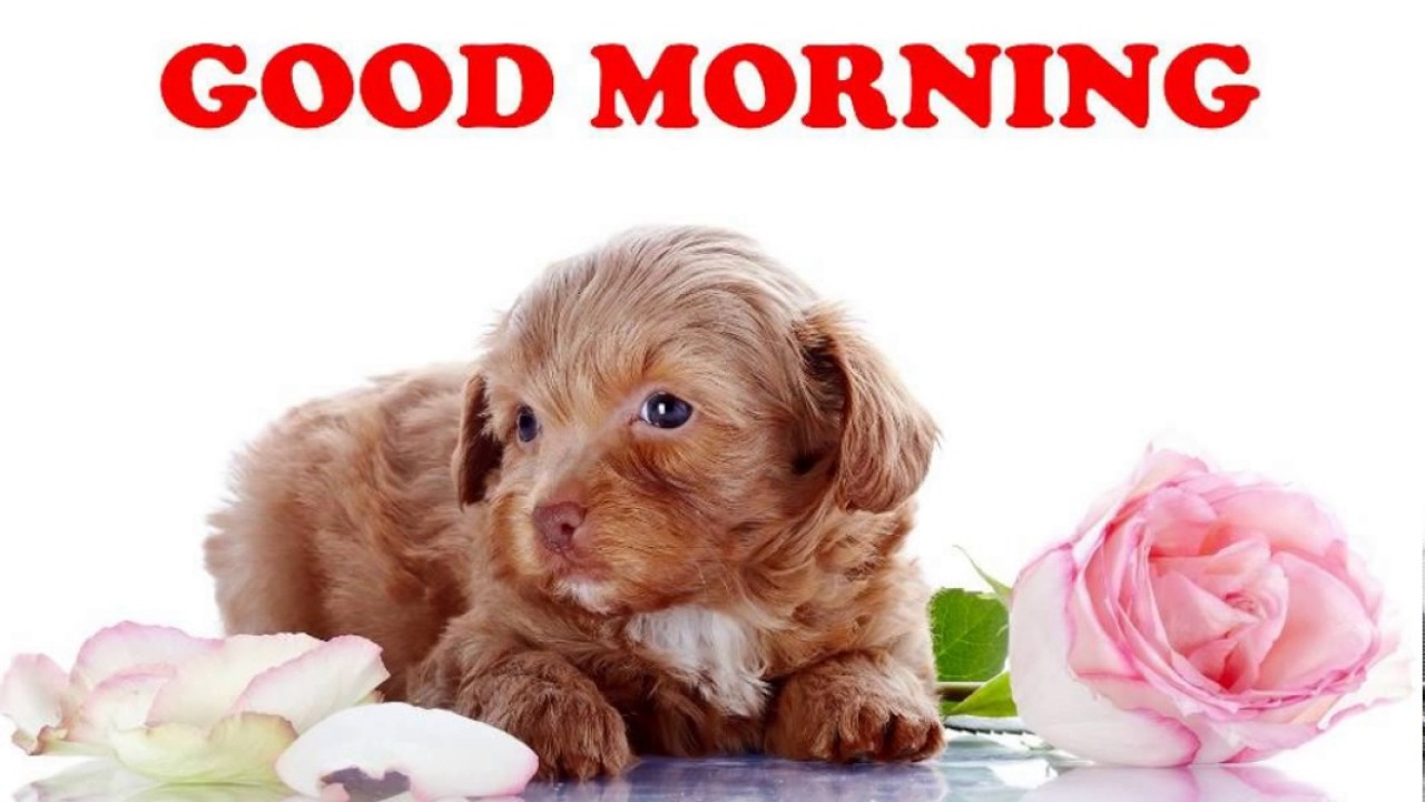 Good Morning Wish With Puppy Good Morning Whatsapp Video Good