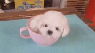 Top 5 Fluffiest Dog Breeds