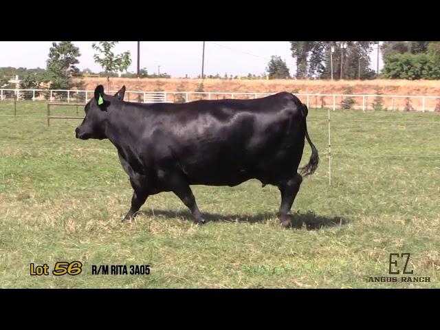 EZ Angus Ranch Lot 56