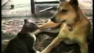 ржачные кошки.flv