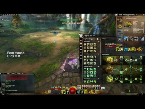 how to find juvenile pets in gw2