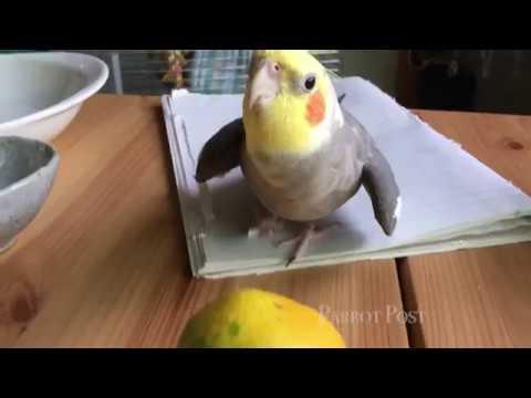 The birds react to an orange.