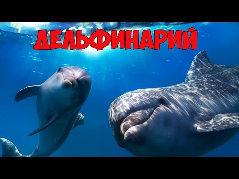 Игра Полли в дельфинарии онлайн (Polly Dolphin Show