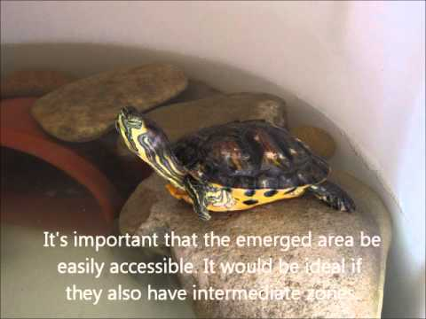 Five advices for the well being of turtles Trachemys scripta