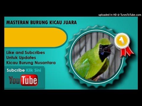 Kumpulan Masteran Mp3 Suara Kicau Burung Cucak Ijo Full