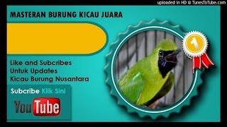 """Kumpulan Masteran Mp3 Suara Kicau Burung Cucak Ijo Full """"[Volume 1]"""""""