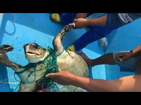 Fishermen Rescue Turtle Trapped In Fishing Net