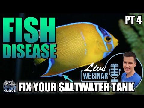 Saltwater FISH DISEASE, Ich, Marine Velvet - Fix Your Problem Saltwater Tank