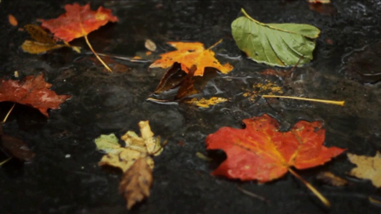 гифка осень дождь падают листья благодаря способности