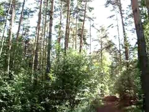 Luca - S: Утро в сосновом лесу. Оформленная работа.