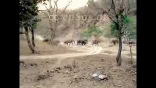 Wild Elephants in Rajaji National Park of India