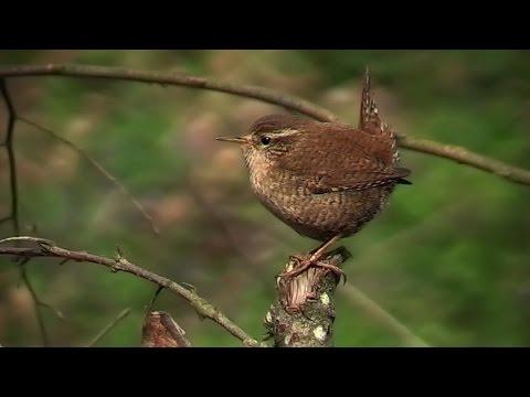 youtube filmek - Édeni főbérlők 2. rész: Ínséges idők magyar amatőr természetfilm (HD)