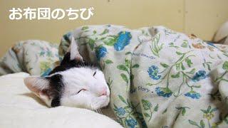 おふとんのちび Futon cat 200715