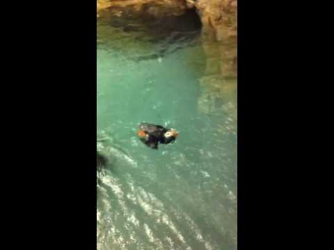 PUFFINS PLAYING  VIDEO BY ASAP PLUMBING OF JACKSONVILLE FLORIDA  904 346 1266