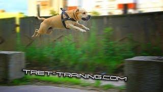 Super Dog Training