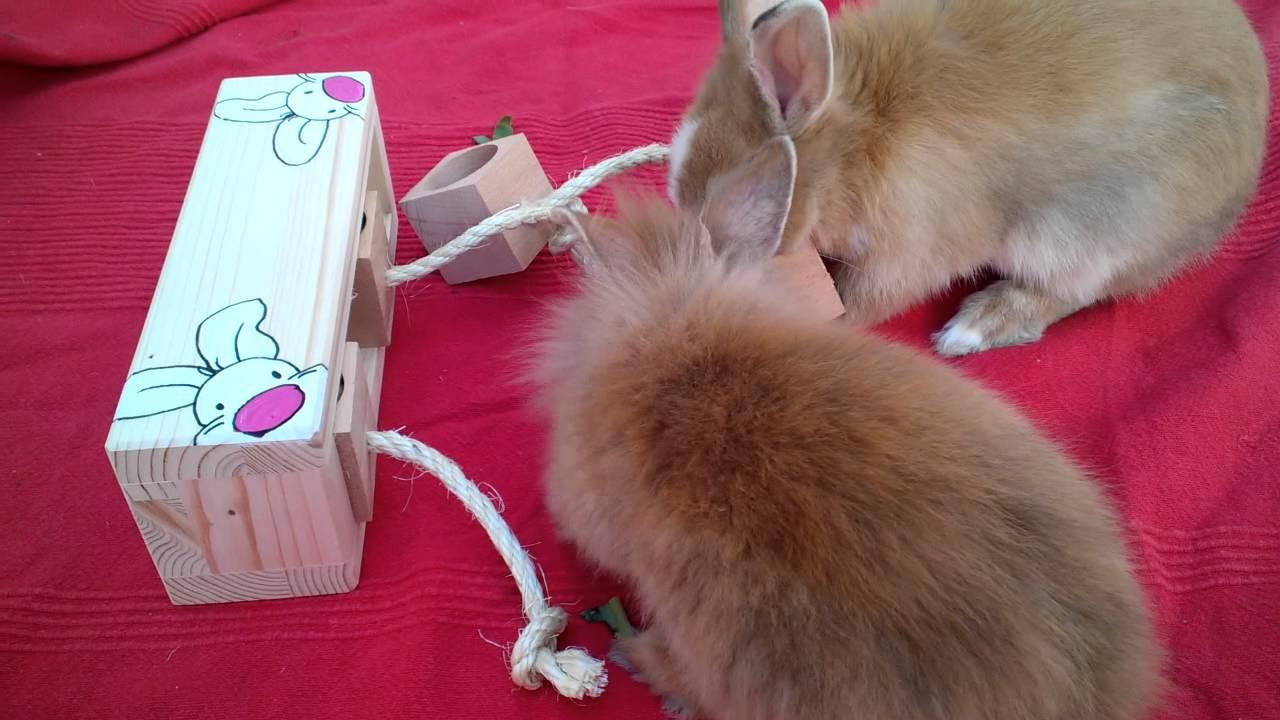 spielzeug kaninchen selber machen: spielzeug selber bauen aber wie
