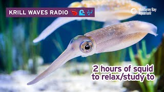 2 Hours Of Squid To Relax/Study/Work To | Lofi Hip Hop | Monterey Bay Aquarium Krill Waves Radio