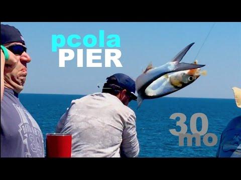 Fishing Massive Bait Schools - Pensacola Pier Florida